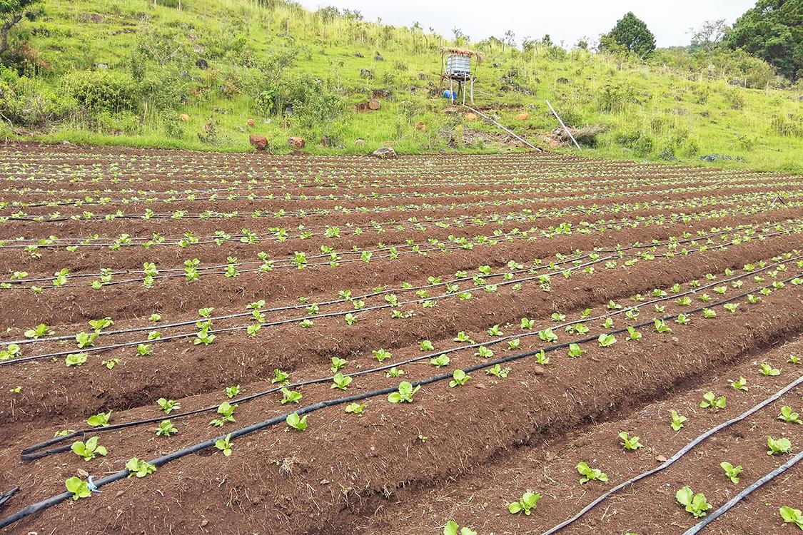 Honduras_Drip-Irrigation-Landscape_Sdc