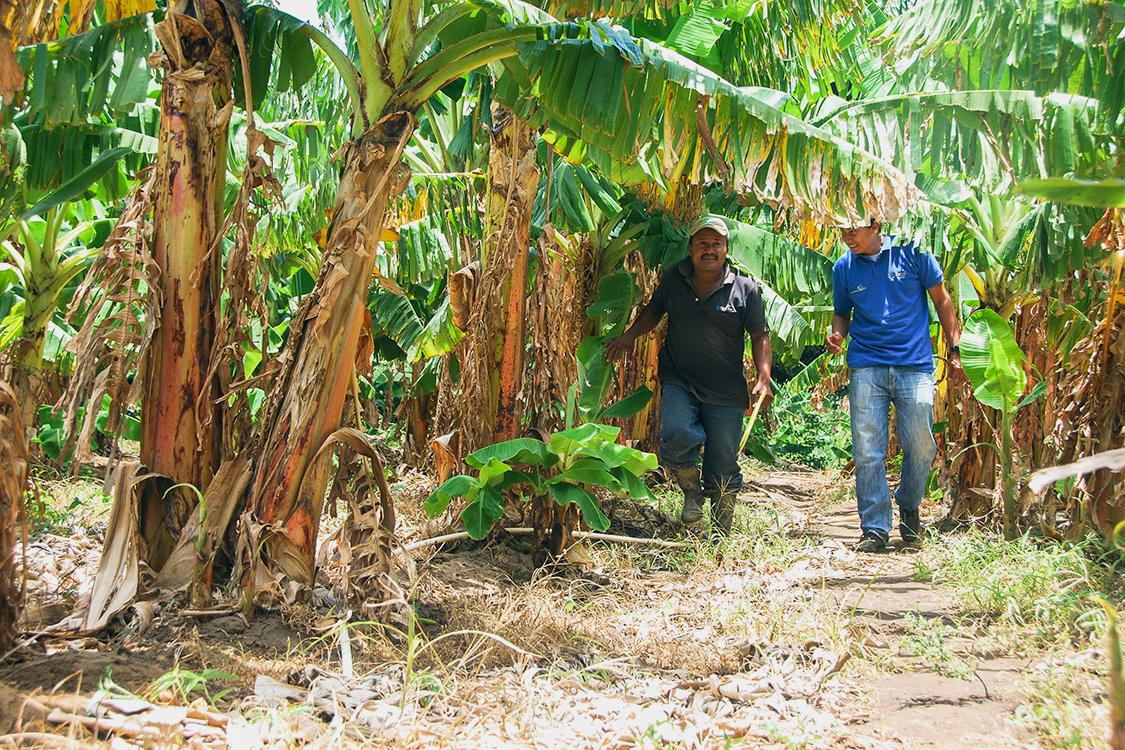 Nicaragua_Francisco-Espinoza_Plantain-Farmer_Ideal-Staff_Sdc