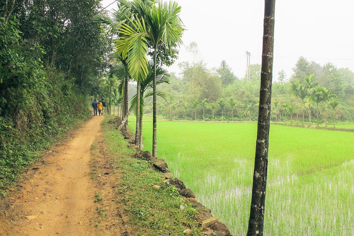 Vietnam_Landscape_Rice-Field_Sdc