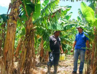 Nicaragua_Francisco-Espinoza_Plantain-Farmer_Ideal-Staff-2_Sdc
